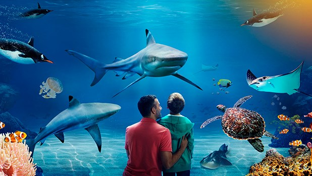 Image result for sea life london