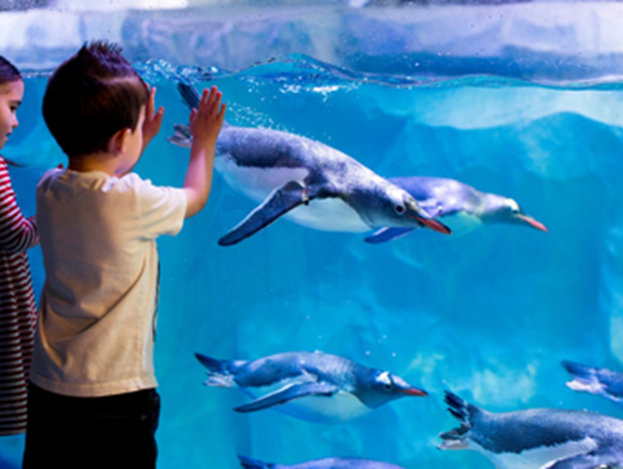 https://www.daysoutguide.co.uk/media/428989/sealife-london-aquarium-add-1.jpg