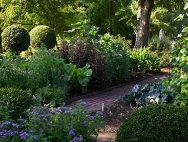 https://www.daysoutguide.co.uk/media/430068/chelsea-physic-garden-detail.jpg