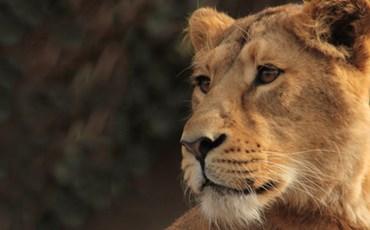ZSL London Zoo)