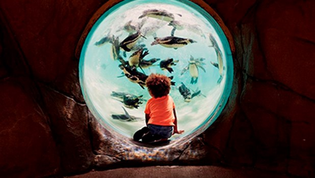London Zoo Tickets 2FOR1 Offers
