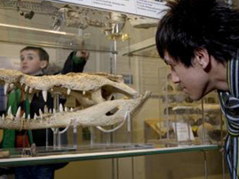 Colchester Natural History Museum
