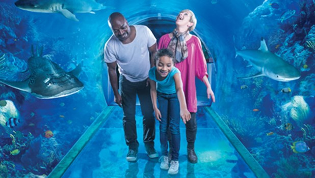 llll Sea Life deals & offers for December Find today's best discounts & sales Get the cheapest price for Sea Life and save money - newlightish.tk When to sealife centre yesterday and prebooked the tickets. When we go there we were given receipt and usuals paperwork and with it .